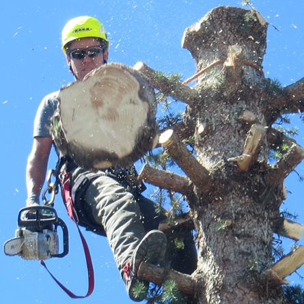 Royal Dutch Tree Services Portfolio